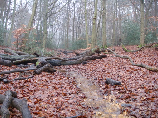 Burnham Beeches 1